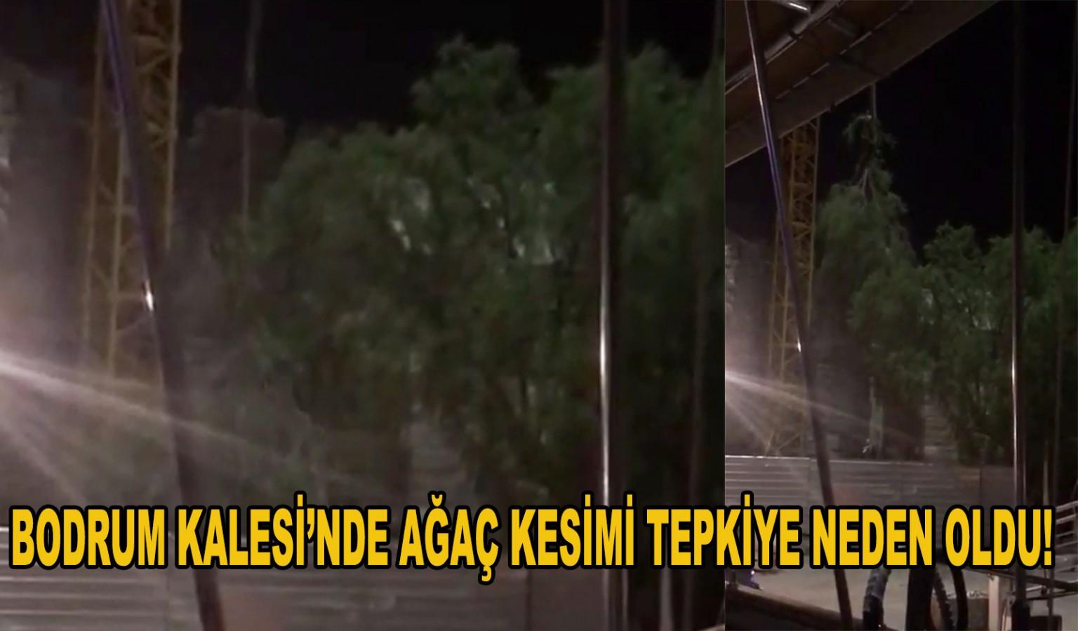 BODRUM KALESİ'NDE AĞAÇ KESİMİ TEPKİYE NEDEN OLDU!
