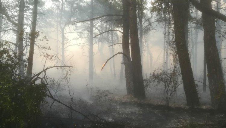 Datça'da Orman Yangını!..