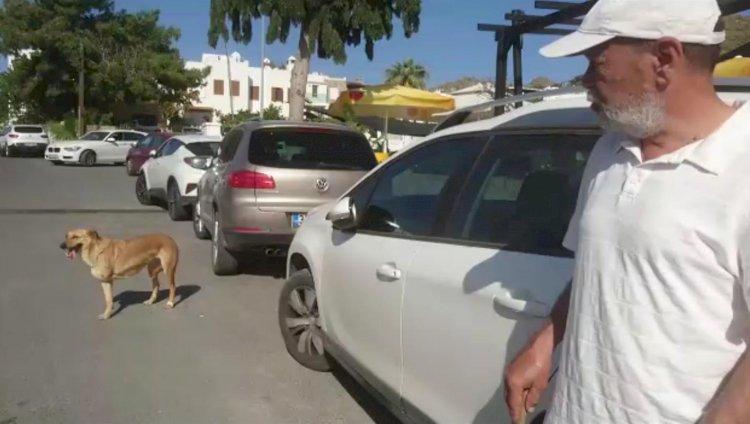 Engelli Köpeğine Gözü Gibi Bakıyor...