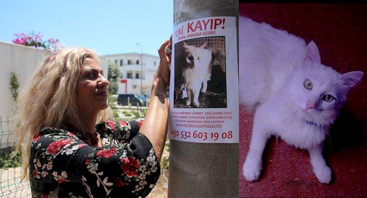 Kedisini Bulana 3 Bin Lira Ödül Verecek