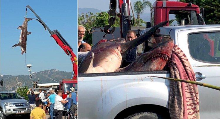 Balıkçıların Ağına 400'er Kiloluk 2 Köpekbalığı Takıldı