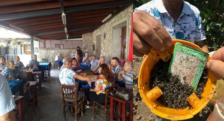 Akdeniz Meyve Sineği İle Mücadele Sürüyor