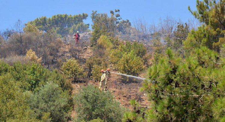 556 Orman İşçisi İşten Çıkarılma İle Karşı Karşıya!