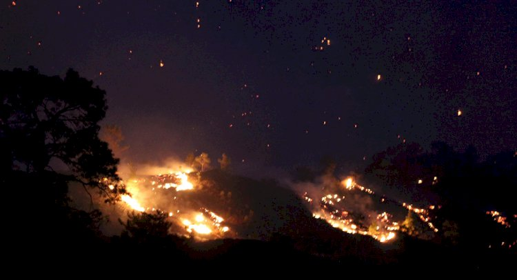 Dalaman'da Kızılçam Ormanları Yanıyor!..