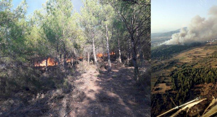 Kısırlar'da Orman Yangını