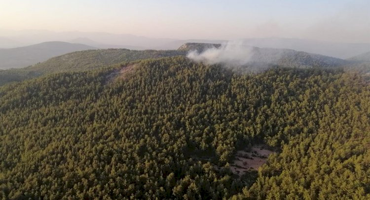 Fesleğen'de 1 Hektar Orman Yandı!