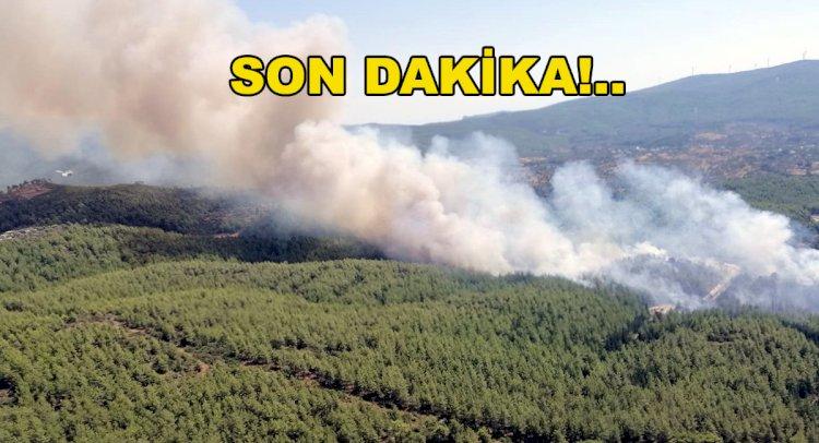 Mumcular'da Orman Yangını!..