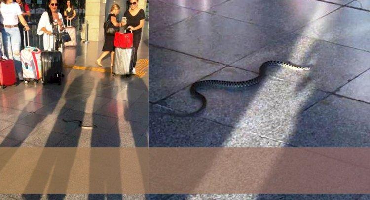 Havalimanında Panik Yarattı!..