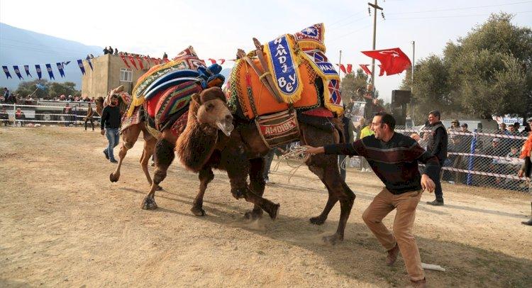 Develer Selimiye'de Arenaya Çıktı
