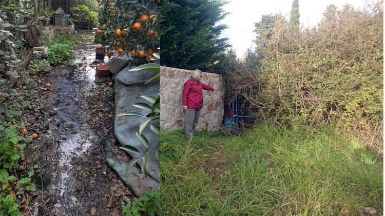 Mandalina Bahçesine Foseptik Akıyor!..