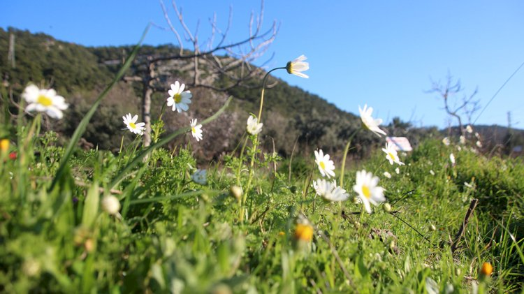Bodrum'a Bahar Geliyor...