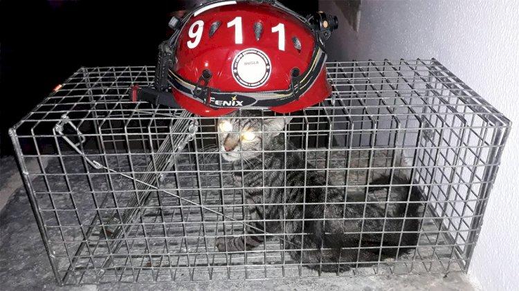 Otomobil Çarpan Kediye Yardım Eli