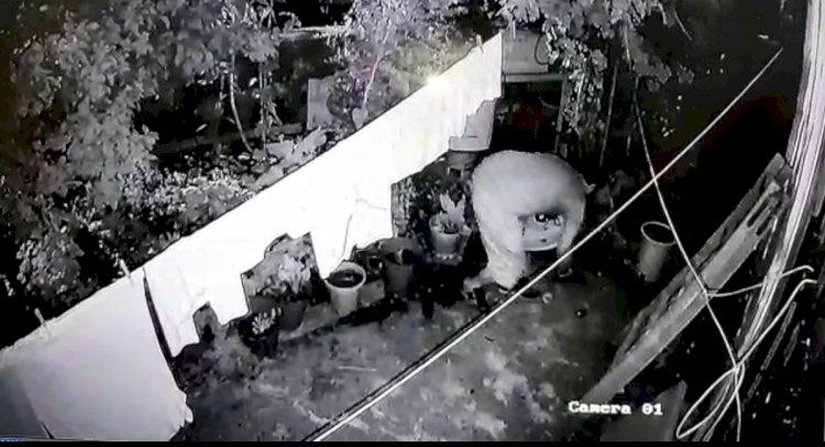 Hırsızlık Anları Güvenlik Kamerasında!..