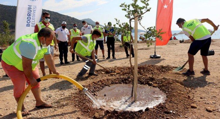 Gerenkuyu'da Ağaçlandırma Çalışması
