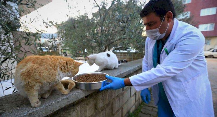 Sokak Hayvanları Büyükşehir Ekiplerine Emanet
