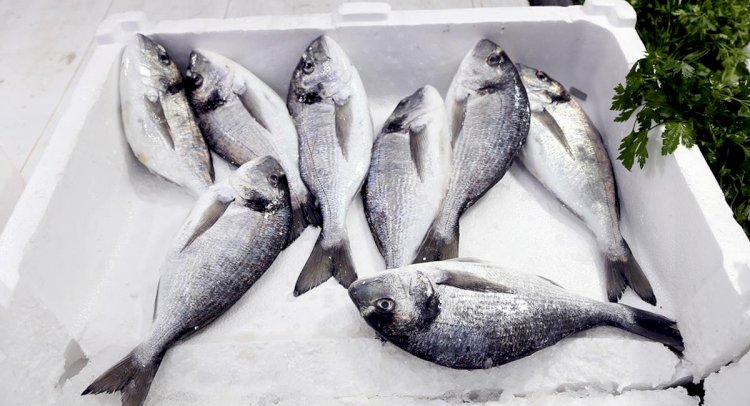 Muğla'dan 78 Ülkeye Balık İhraç Edildi