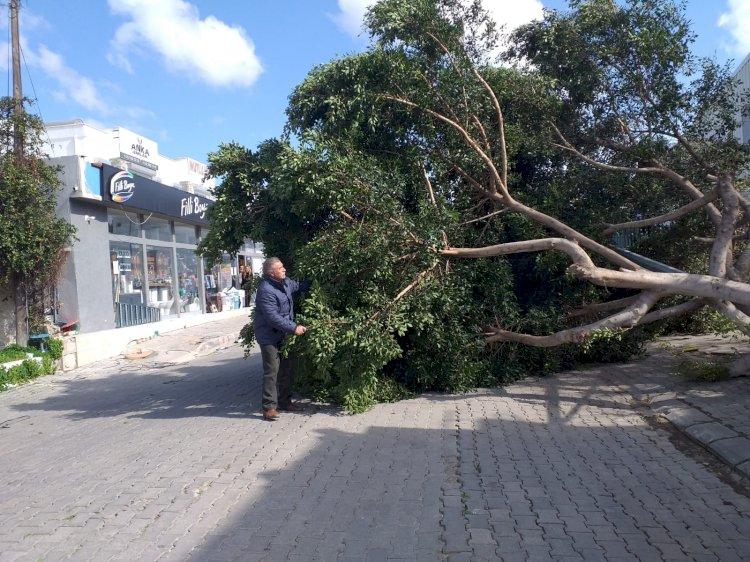 Fırtına Yarımada Genelinde Etkili