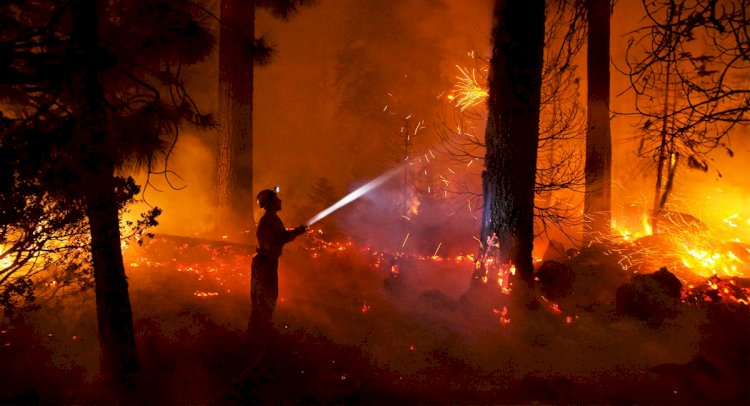 Orman Yangını Çıkardı, Tutuklandı!